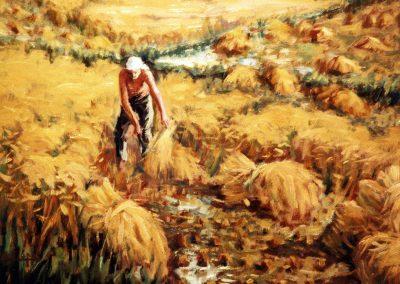 Buena cosecha del arroz