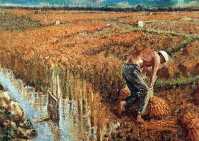 Siega del arroz sueca