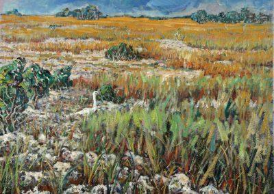 Everglades en invierno